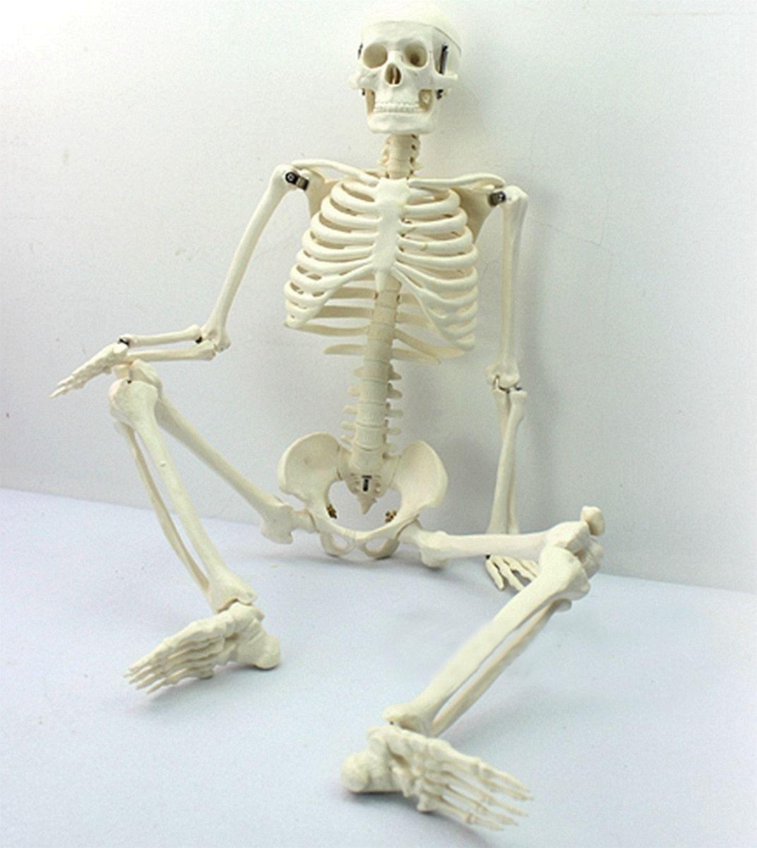 2FDF Full Body PVC 45CM Human Anatomical Anatomy Skeleton Medical ...