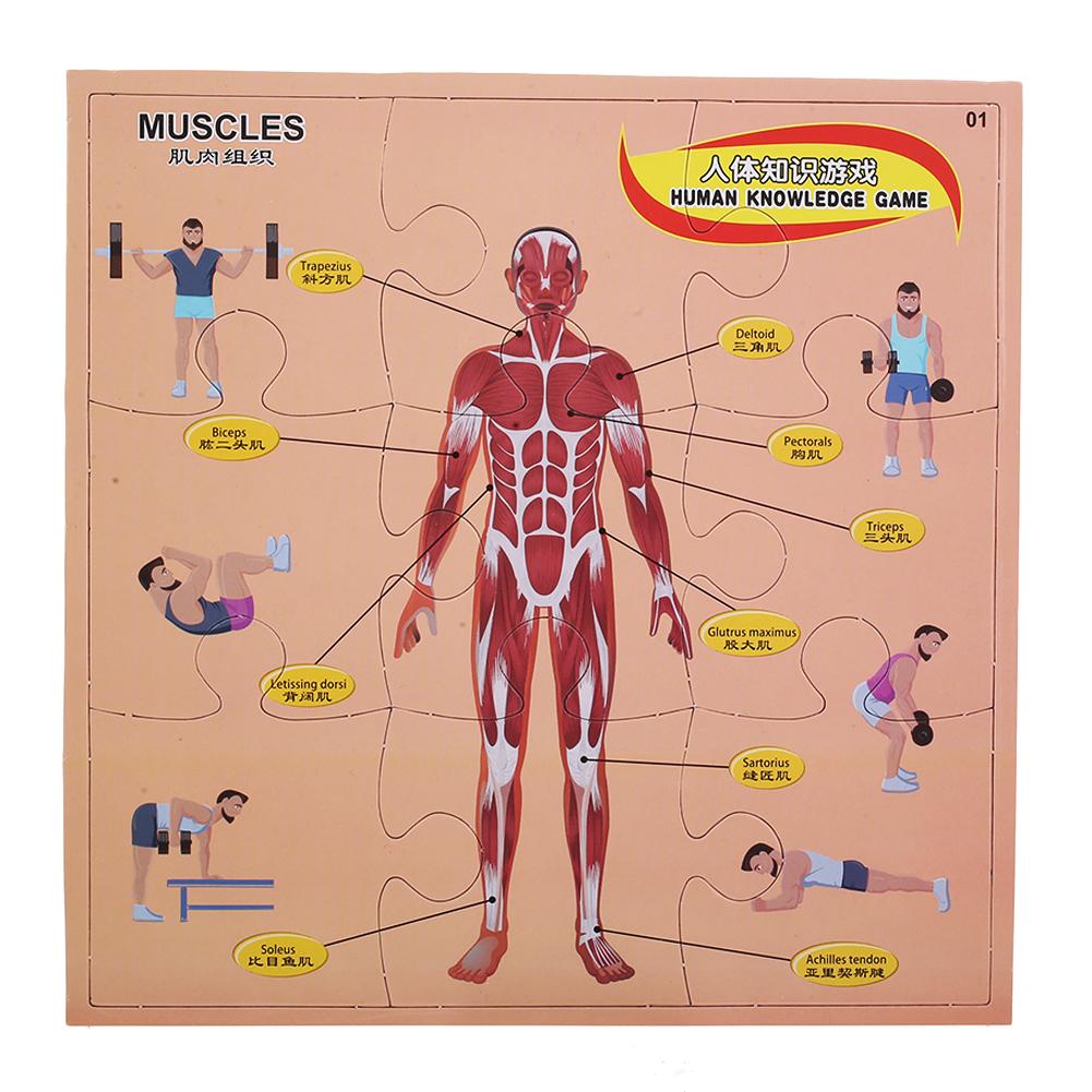 A624 Intelligent Human Anatomy Game Puzzle Plastic 3d Flat